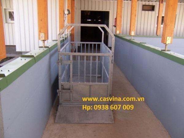 1a1e8912d3 Bench_Scale CÂN BÒ & CÂN HEO Cân bàn điện tử